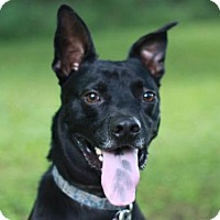 Adopt A Pet :: River - FREE TO ADOPT! - Cookeville, TN