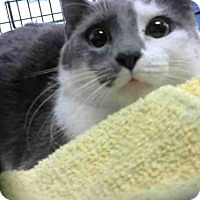 Adopt A Pet :: *DANI - Sacramento, CA