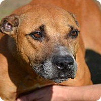 Adopt A Pet :: Blossom - Ridgeland, SC