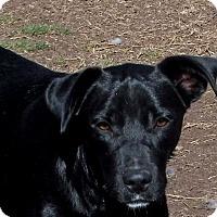 Adopt A Pet :: **ANNABELLE - Peralta, NM