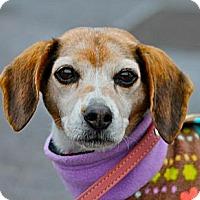 Adopt A Pet :: Daisy - Hastings, NY