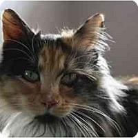 Adopt A Pet :: Amelia - Davis, CA