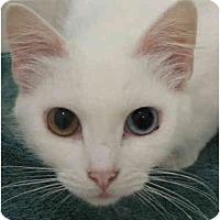 Adopt A Pet :: Jonnina - Davis, CA