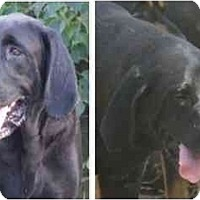 Adopt A Pet :: Tar & Onyx - Carrollton, GA