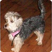 Adopt A Pet :: Bentley - The Village, FL