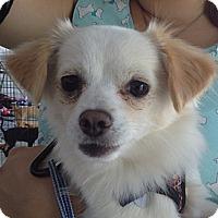 Adopt A Pet :: Mikey (YW) - Santa Ana, CA