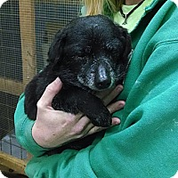 Adopt A Pet :: Henry - Winchester, VA