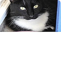 Adopt A Pet :: Johnny - El Cajon, CA