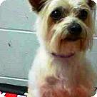 Adopt A Pet :: Tiffany