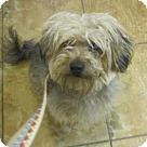 Adopt A Pet :: Ivan