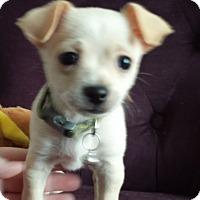 Adopt A Pet :: ARNIE - Higley, AZ