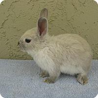 Adopt A Pet :: Nicola - Bonita, CA