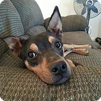 Adopt A Pet :: Jada - Perris, CA
