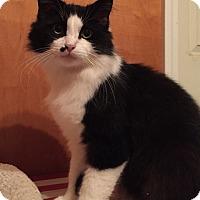 Adopt A Pet :: Puffin - Somerset, KY