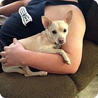 Adopt A Pet :: Eddie - Las Vegas, NV