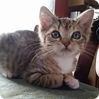 Adopt A Pet :: Sally - Turnersville, NJ