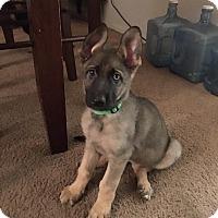 Adopt A Pet :: Merci - Phoenix, AZ