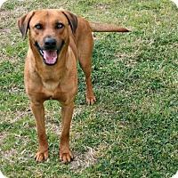 Adopt A Pet :: Rambo - Lufkin, TX