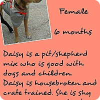 Adopt A Pet :: Daisy - Stephenville, TX