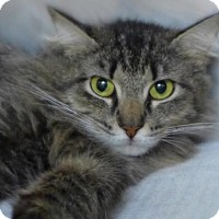 Adopt A Pet :: C-69464 Theresa - Westampton, NJ