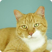 Adopt A Pet :: Albert - Whitewater, WI