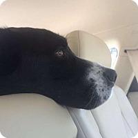 Adopt A Pet :: Rupert - Boulder, CO