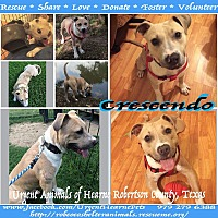 Adopt A Pet :: Crescendo - Hearne, TX