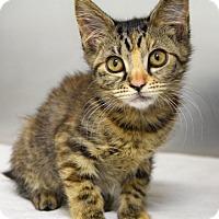 Adopt A Pet :: Eliot - Dublin, CA