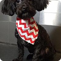 Adopt A Pet :: Steve Perry - McKinney, TX