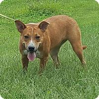 Adopt A Pet :: Coo - Mt. Vernon, IL