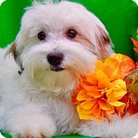Adopt A Pet :: Fallon - Irvine, CA