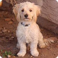 Adopt A Pet :: Lucky - Phoenix, AZ