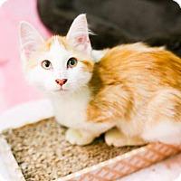 Adopt A Pet :: Lily - Austin, TX