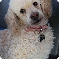 Adopt A Pet :: Phyllis - Alta Loma, CA