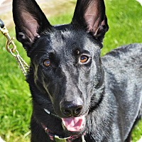 Adopt A Pet :: Willow *Pre-Teen* - Gretna, NE