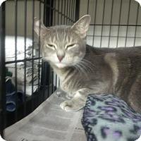 Adopt A Pet :: Pretty Lady - North Kingstown, RI