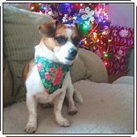 Adopt A Pet :: Jackson - Union Grove, WI
