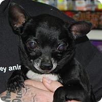 Adopt A Pet :: Bobby - Brooklyn, NY