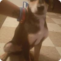 Adopt A Pet :: Jax - Colmar, PA