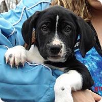 Adopt A Pet :: Tacoma (11 lb) Video! - Burlington, VT