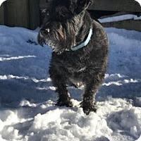 Adopt A Pet :: Logan - Cambridge, ON