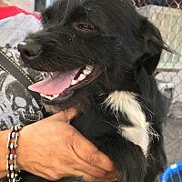 Adopt A Pet :: Bein - San Ramon, CA