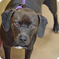 Adopt A Pet :: Jackson - Sierra Vista, AZ