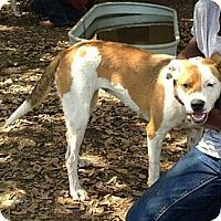 Adopt A Pet :: Lexy - Spring Branch, TX