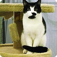 Adopt A Pet :: Envy - Mission, BC
