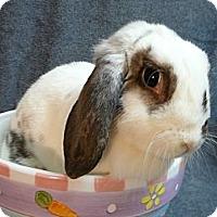 Adopt A Pet :: Pollyanna - Newport, DE