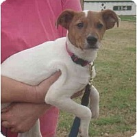 Adopt A Pet :: Harley in Houston - Houston, TX