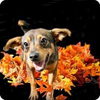 Adopt A Pet :: Kate - Lufkin, TX