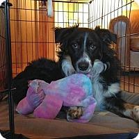 Adopt A Pet :: Sydney - Austin, TX