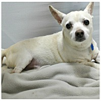 Adopt A Pet :: Tanner - Forked River, NJ
